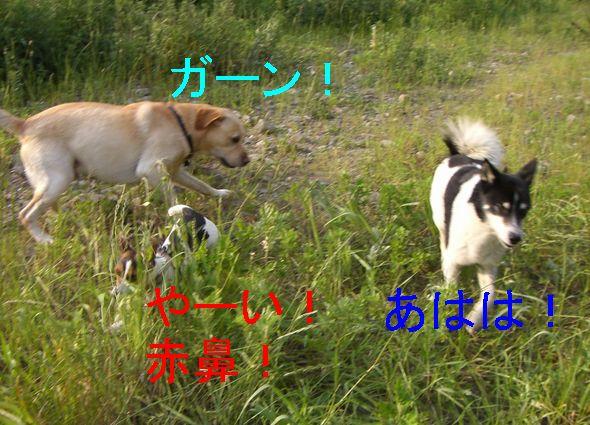 f0053952_9393211.jpg