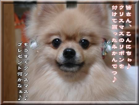 b0078073_1544471.jpg