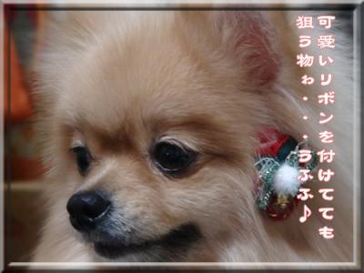 b0078073_15472459.jpg