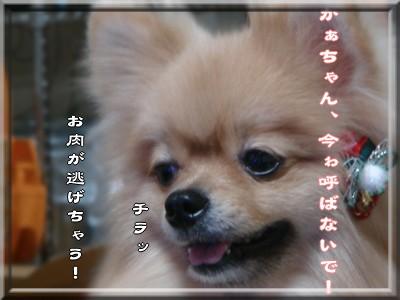 b0078073_15494123.jpg