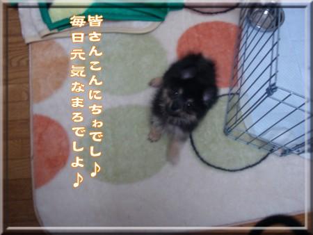 b0078073_1654136.jpg