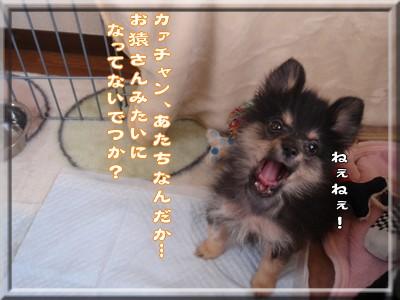b0078073_1694599.jpg