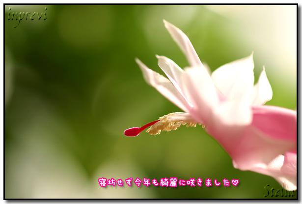 d0015026_95112.jpg