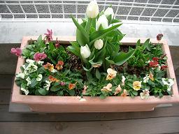 ウッドデッキの花壇_c0079828_2226557.jpg
