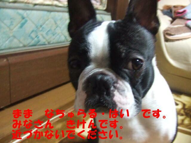 f0059334_9114778.jpg
