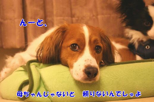 d0013149_031119.jpg