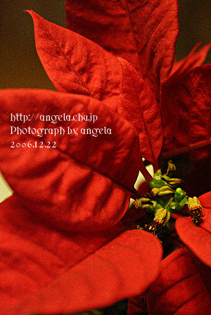 f0121853_23522624.jpg