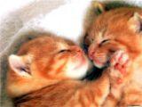 関西弁の猫でんねん。      (ネコのネドコはドコ?)_d0083265_56535.jpg