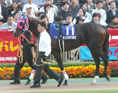 ファストタテヤマ(06'天皇賞・秋-その11-)_b0015386_2359138.jpg