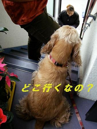 b0067012_0512872.jpg