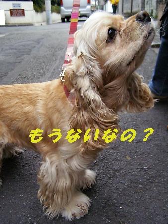 b0067012_0515353.jpg