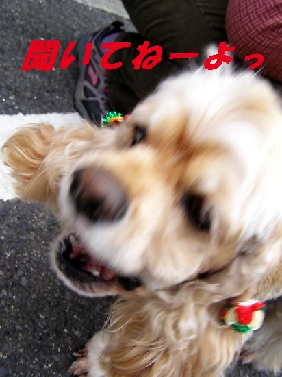 b0067012_1283828.jpg