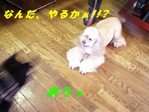 b0067012_1414846.jpg