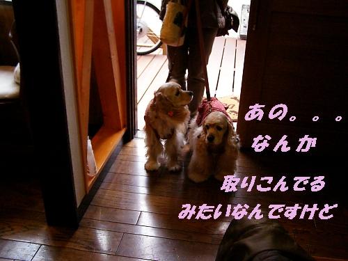 b0067012_145464.jpg
