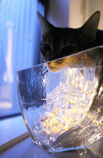 [猫的]光と溶け合うガラス_e0090124_9304633.jpg