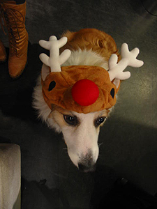 Happy Merry X'mas♪_f0035333_19524713.jpg