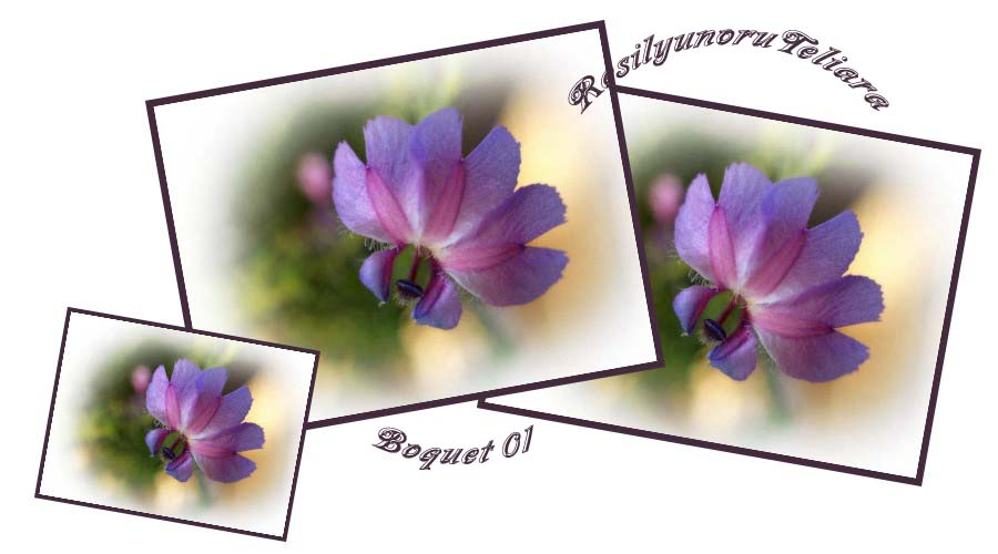 f0103534_2011106.jpg
