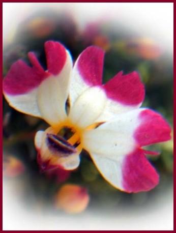 f0103534_20124614.jpg