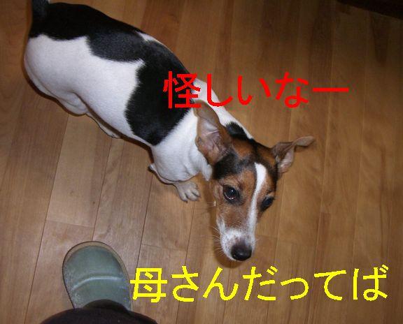 f0053952_13403642.jpg