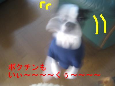 c0092787_135822.jpg