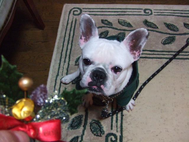 クリスマスイヴ 2006年12月24日 日曜日_f0090117_23291620.jpg