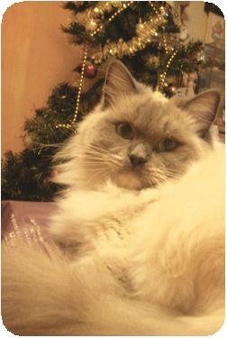 メリークリスマス!!_c0080132_1453244.jpg