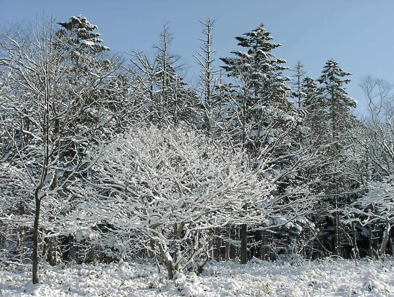 ホワイトクリスマス  12月24日_f0113639_16135572.jpg