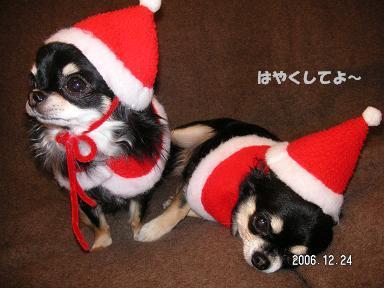 クリスマスイヴ_d0006467_1910785.jpg
