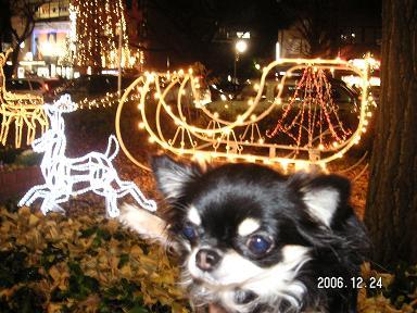 クリスマスイヴ_d0006467_1984065.jpg