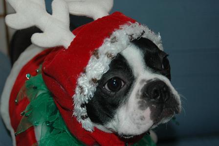 Merry christmas ♪_d0003977_11415411.jpg