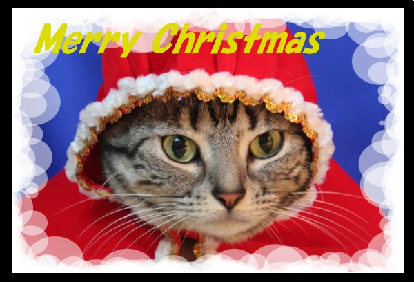 メリークリスマス☆_d0058182_15352339.jpg