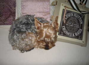 ベンチ椅子の上で、布製のバックの端に頭を乗せて丸くなって寝ているわんこの姿。。