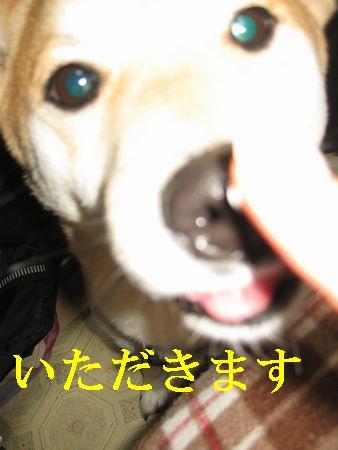 e0085147_323350.jpg