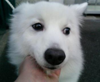 12月24日 横須賀で飼い主さんを待っています_e0107049_042069.jpg