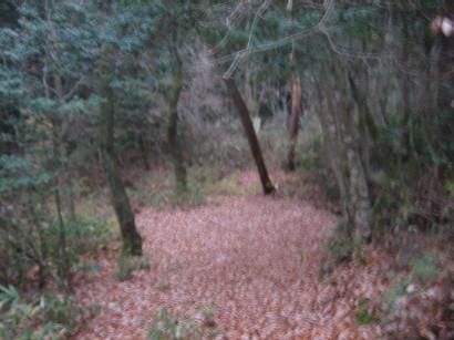 しいたけの森へ_b0100062_14121317.jpg