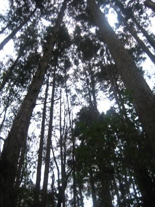 しいたけの森へ_b0100062_14152356.jpg