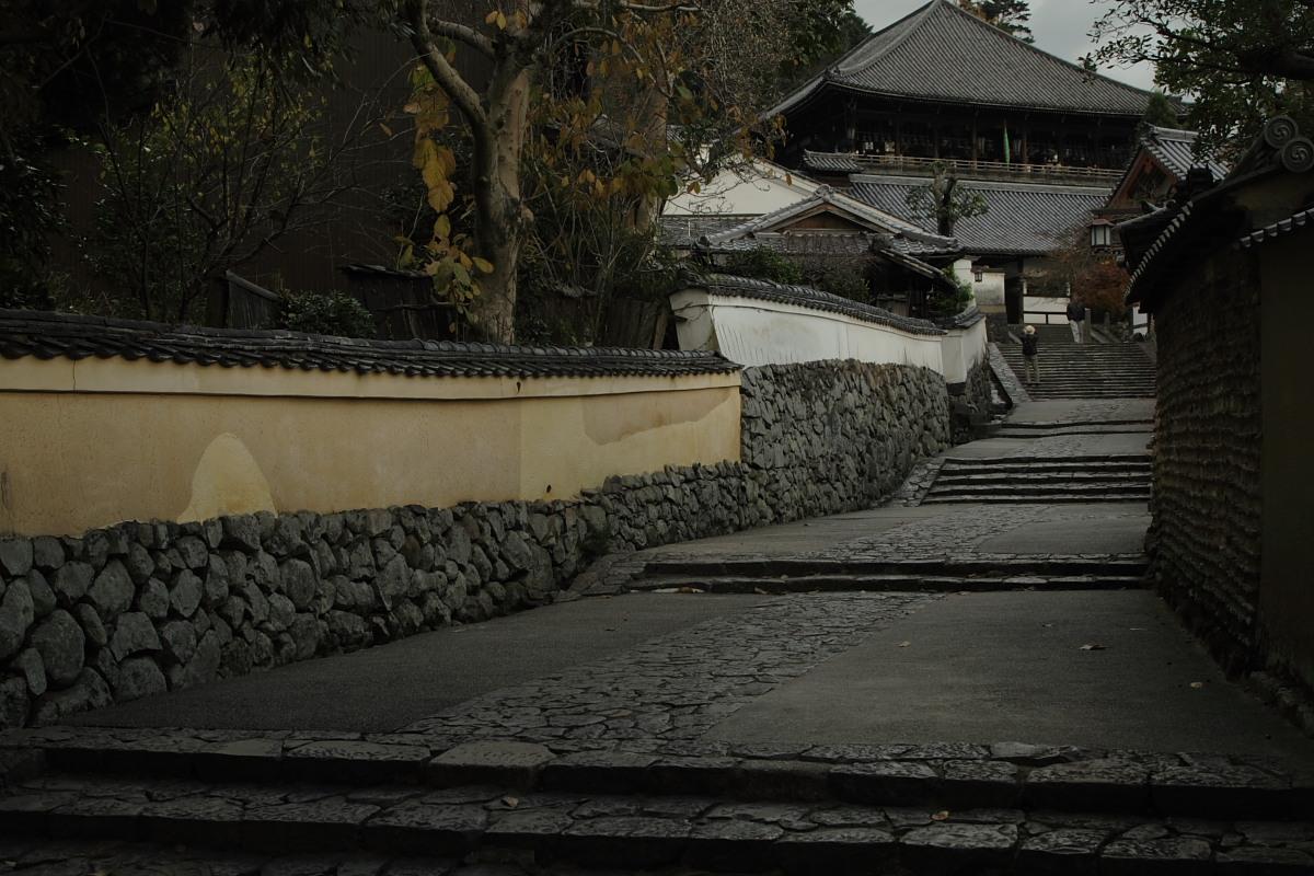 奈良公園 3_f0021869_12344461.jpg
