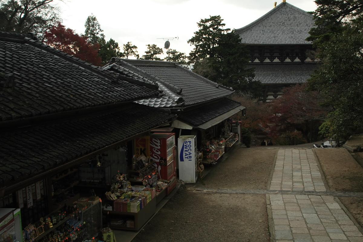 奈良公園 3_f0021869_12351524.jpg