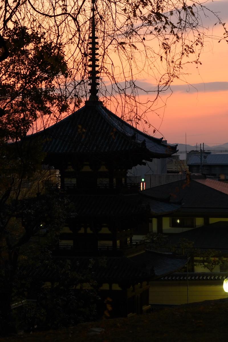 奈良公園 3_f0021869_12374530.jpg