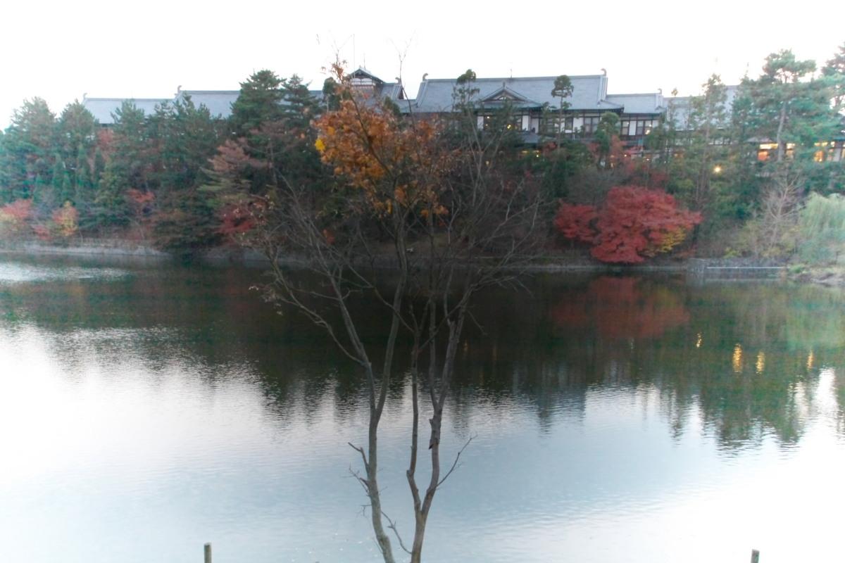 奈良公園 3_f0021869_12395767.jpg