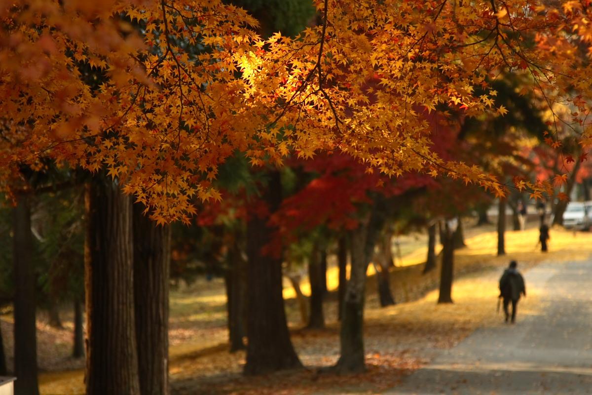 奈良公園 3_f0021869_12442113.jpg