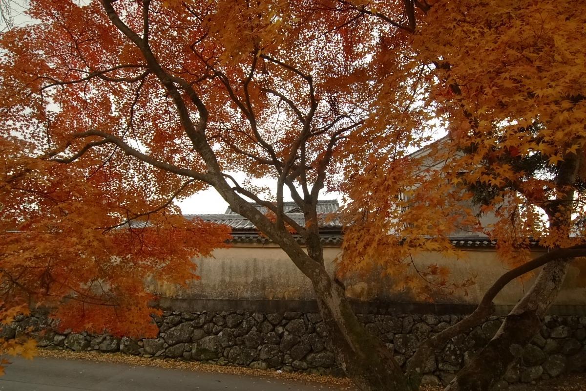奈良公園 3_f0021869_12455776.jpg