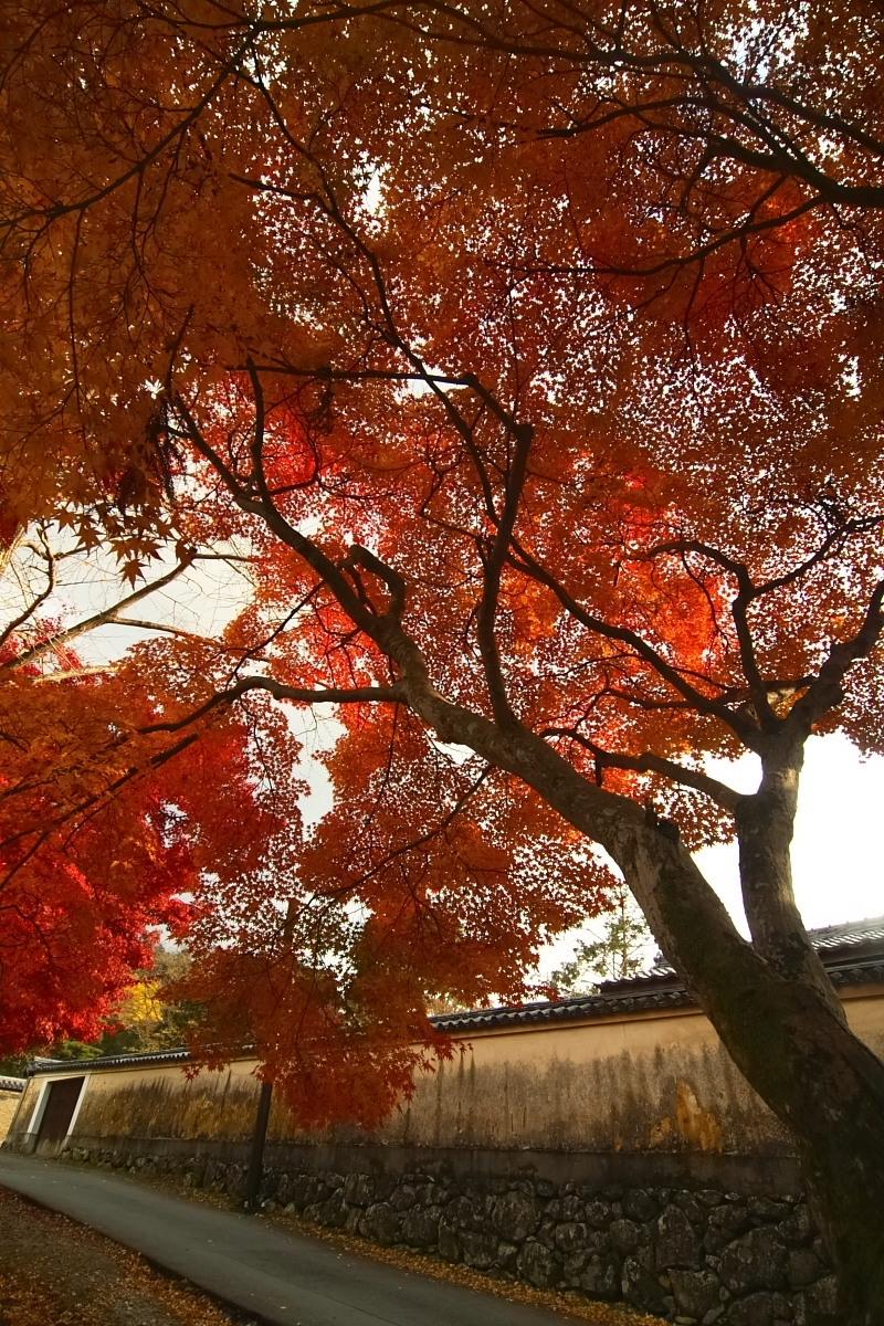 奈良公園 3_f0021869_12481626.jpg