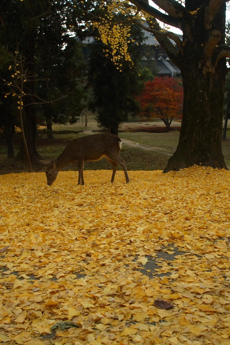 奈良公園 2_f0021869_12544330.jpg