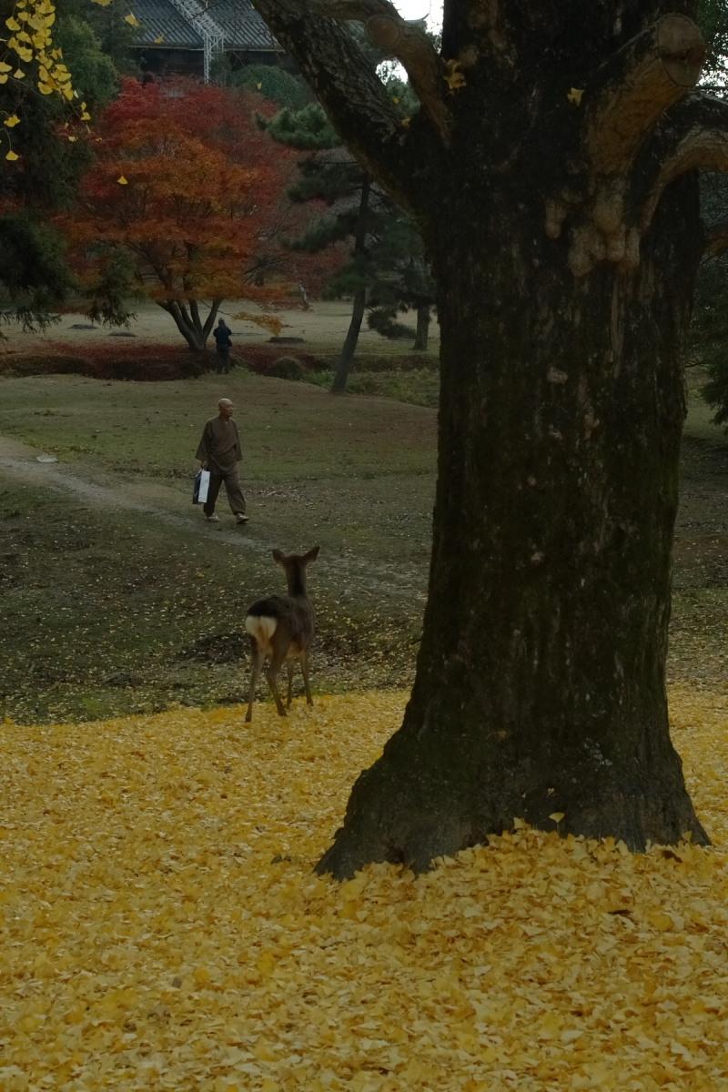 奈良公園 2_f0021869_12554331.jpg