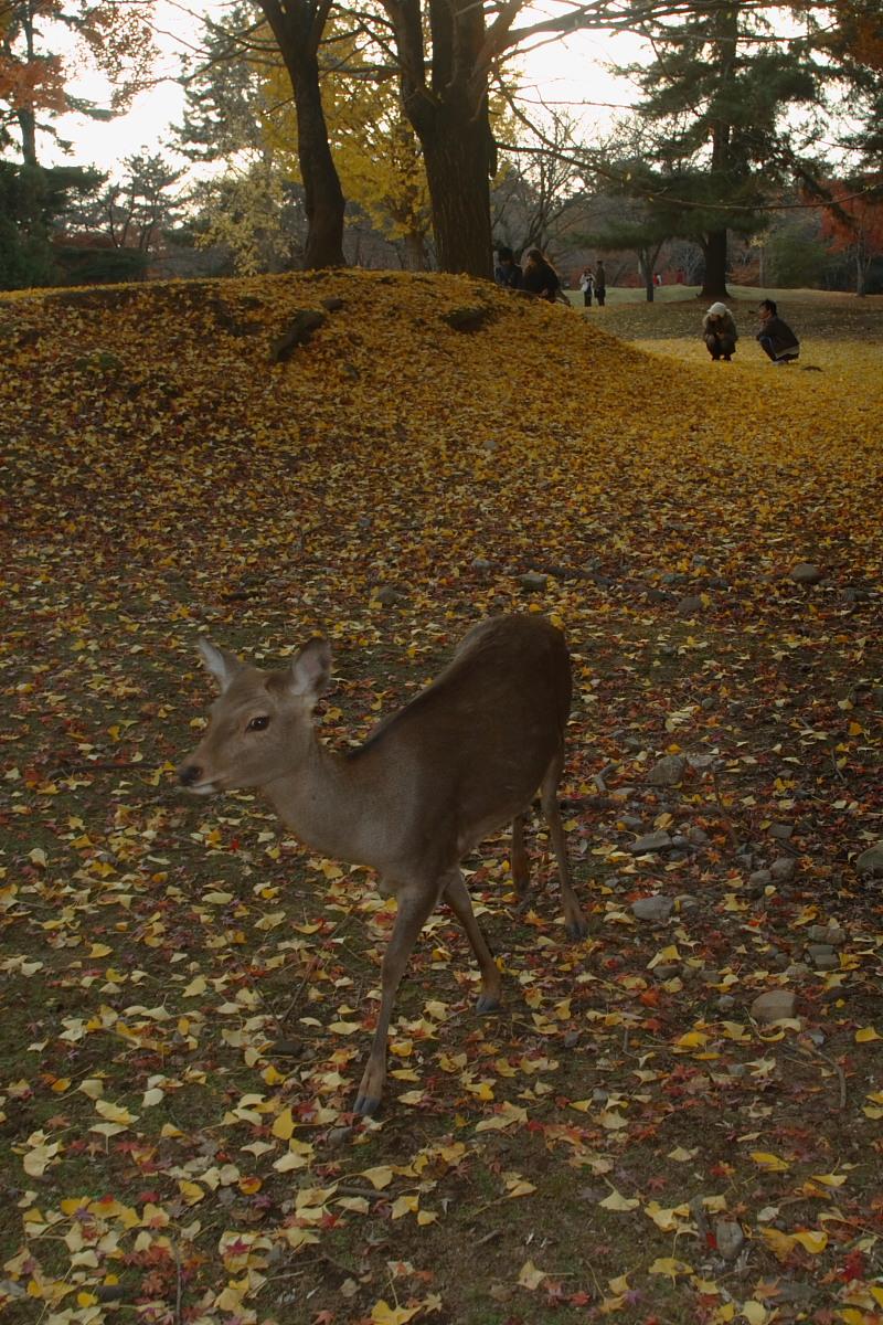 奈良公園 2_f0021869_12563689.jpg