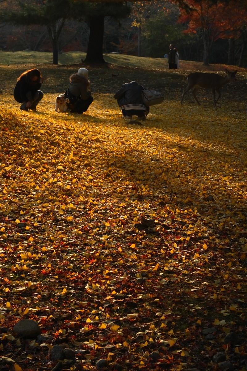 奈良公園 2_f0021869_12571944.jpg