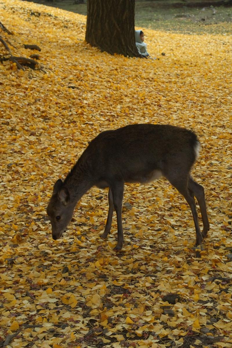 奈良公園 2_f0021869_12573760.jpg
