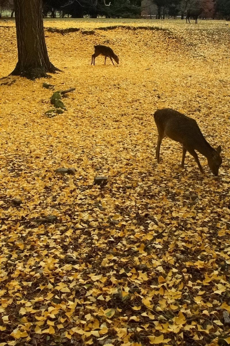 奈良公園 2_f0021869_12591788.jpg