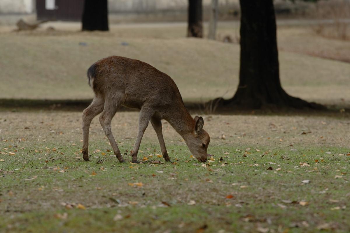 奈良公園 4  <キスキスキス>_f0021869_1325115.jpg